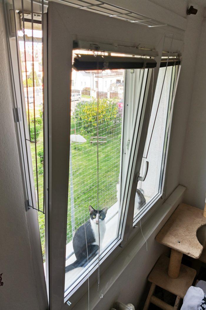Díky bezpečnostním mřížkám na oknech můžete větrat bez obav.  Nezapomeňte pustit kočku dovnitř...
